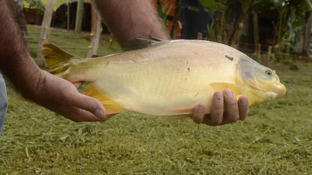 Con bajo financiamiento, la piscicultura resiste